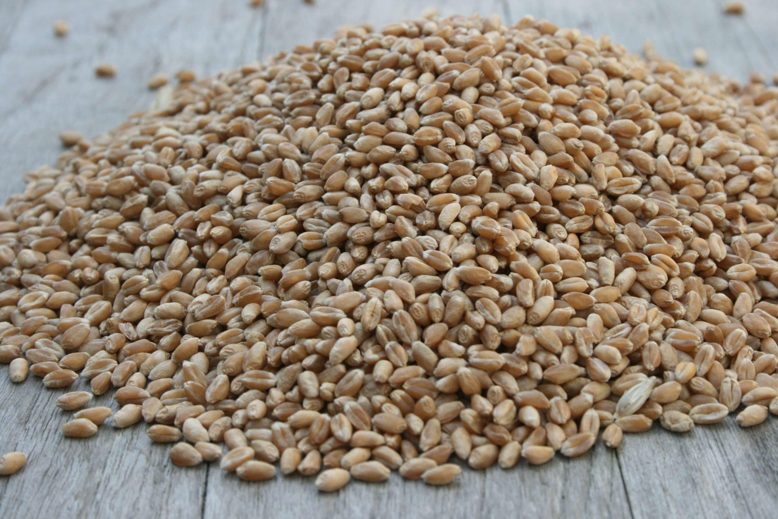 gereinigter Weizen